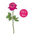 single pink rose flower beautiful vector image