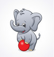 baby elephant playing with red ball vector image