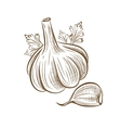 picture of garlic vector image vector image