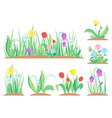 spring garden flowers early flower colorful vector image vector image