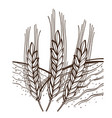 monochrome growing wheat on field and sunny day vector image