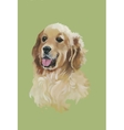 English cocker spaniel Animal dog watercolor vector image vector image