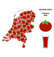 netherlands map composition of tomato vector image vector image
