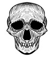 the image of the skull vector image