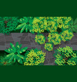 topview marble bridge in forest vector image vector image