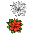 Christmas poinsettia star flower isolated sketch vector image