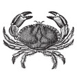 Dungeness crab vintage vector image