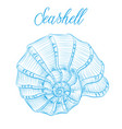 nautilus sea shell hand drawn blue linear vector image
