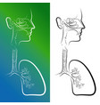 sketch of respiratory system organs vector image