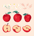 summer set with apples leaves and flowers vector image vector image