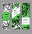 banners with hemp leaves black-white design with vector image vector image
