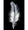 feather white vector image vector image