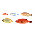 fish different sizes set growth stages vector image