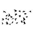 flock flying birds silhouette birds vector image vector image