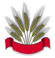 Isolated bunch of wheat with ribbon vector image vector image