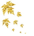 Autumn fall with golden maple leaves vector image