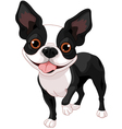 Boston terrier vector | Price: 3 Credits (USD $3)