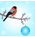 Bullfinch on the branch vector image vector image