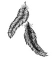 grunge feathers design vector image vector image