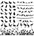 Silhouette of birds vector image