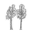 birches tree sketch vector image vector image
