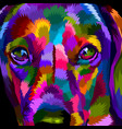 close up face dachshund vector image