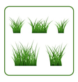 Green grass bushes isolated vector image