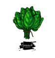 spinach bunch hand drawn vegetable vector image