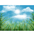 background with grass and sky vector image vector image