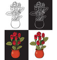 red rose in pot vector image