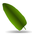 colorful naturalistic palm leaf vector image