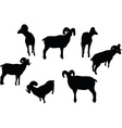 big horn sheep silhouette in twist head pose vector image