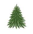 fir tree isolated on white vector image vector image