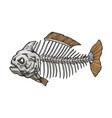 piranha fish skeleton color sketch engraving vector image vector image