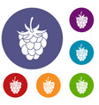 raspberry or blackberry icons set vector image vector image
