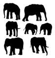 set of elephants vector image