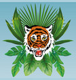 tiger head on tropical leaves blue background vector image