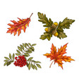 various green and orange autumn leaves vector image