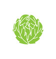 cabbage icon template isolated vector image