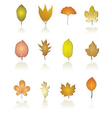 different kinds of tree leaf icons vector image