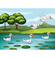 Ducks and water vector image vector image