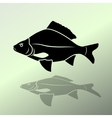 Fish icon Food symbol Cyprinidae family Fresh vector image vector image