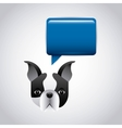 French bulldog icon Pet and dog design vector image vector image