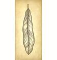 ink sketch of macadamia leaf vector image vector image
