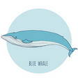 blue whale vector image vector image