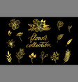 floral set of very detailed hand-drawn elements vector image