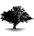 Gettysburg Tree vector image vector image