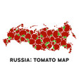russia map collage of tomato vector image vector image