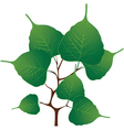 Branch with green leaves vector image vector image