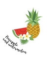 pineapple and watermelon vector image vector image